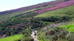 camino de santiago field fe